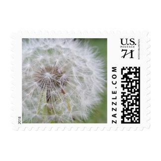 Dandelion Seeds Postage Stamps