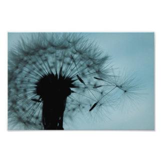 Dandelion Seeds Teal and Black Photo Print