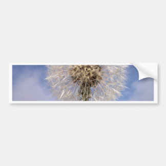 Dandelion Sky Car Bumper Sticker