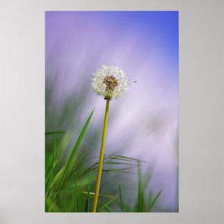 Dandelion sky print