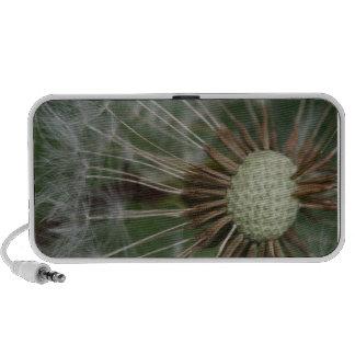 dandelion travel speakers