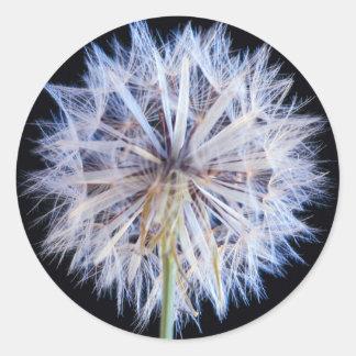 Dandelion (Taraxacum Officinale) Seed Head Classic Round Sticker