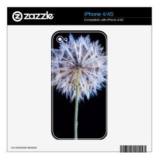 Dandelion (Taraxacum Officinale) Seed Head iPhone 4 Skin