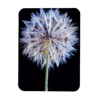 Dandelion (Taraxacum Officinale) Seed Head Rectangular Photo Magnet