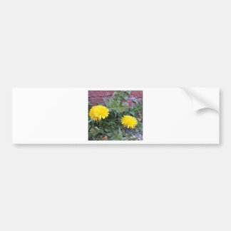 Dandelion Will Make You Wise Bumper Stickers