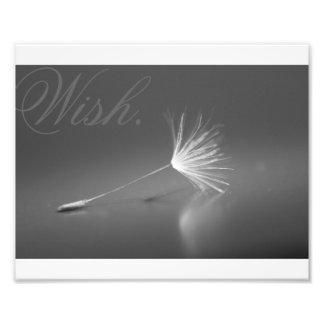 Dandelion Wish Photo