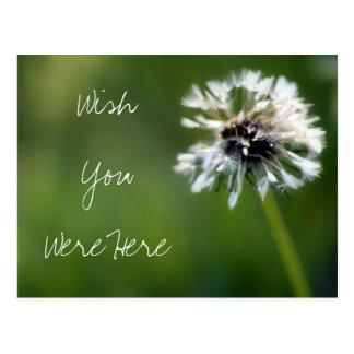 "Dandelion ""Wish You Were Here"" Photography Postcard"
