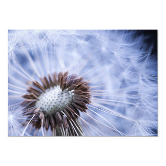 Dandelion with seeds card
