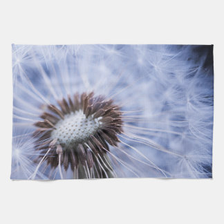 Dandelion with seeds towels