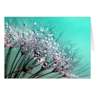 Dandelion With Water Droplets Fine Art Photography Card