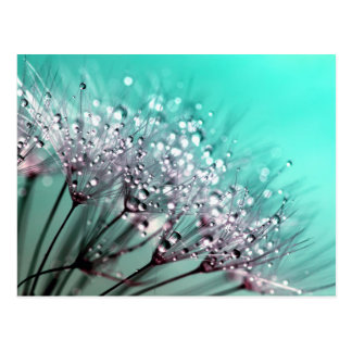 Dandelion With Water Droplets Fine Art Photography Postcard
