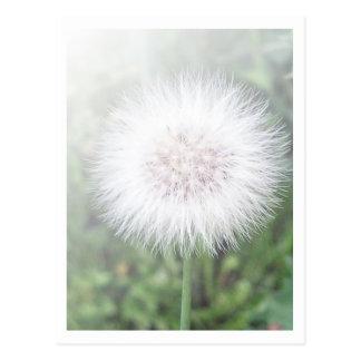 Dandelioness Seedlings Postcard