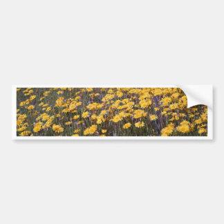 Dandelions Bumper Sticker
