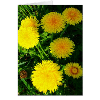 Dandelions Stationery Note Card