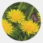 Dandelions Classic Round Sticker