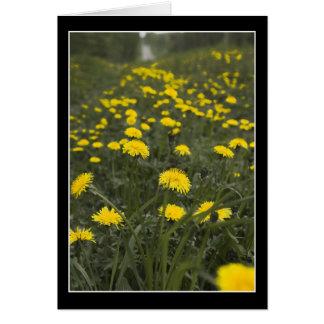 Dandelions in Minnesota Card