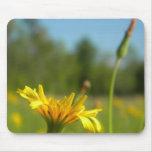 Dandelions Mouse Pad