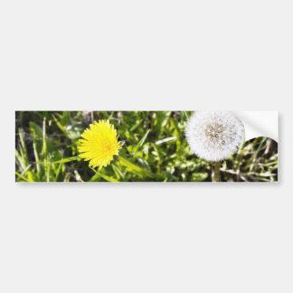 Dandelions On The Meadow Bumper Sticker
