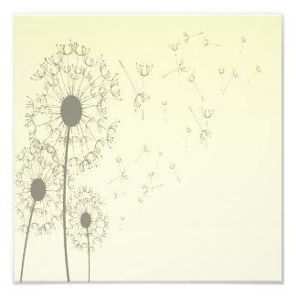 Dandelions Photo Print