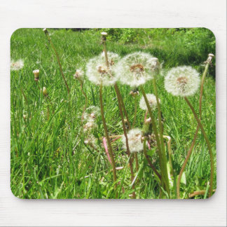 Dandelions – ready to make a wish mouse pad