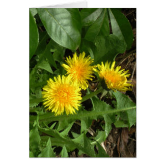 Dandelions - Spring Flowers before Summer Wishes Card