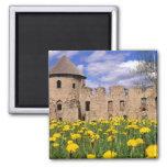 Dandelions surround Cesis Castle in central 2 Inch Square Magnet