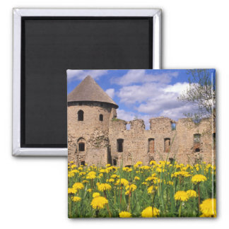 Dandelions surround Cesis Castle in central 2 Inch Square Magnet