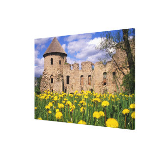 Dandelions surround Cesis Castle in central Canvas Print
