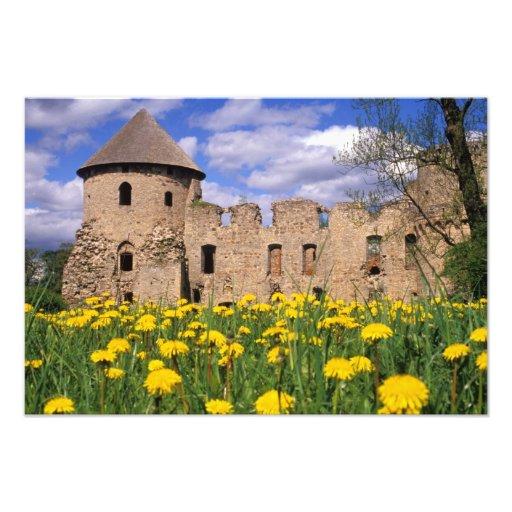 Dandelions surround Cesis Castle in central Photo Print