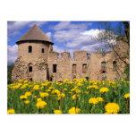 Dandelions surround Cesis Castle in central Postcard