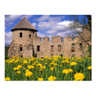 Dandelions surround Cesis Castle in central Postcard