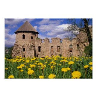 Dandelions surround Cesis Castle in central Poster