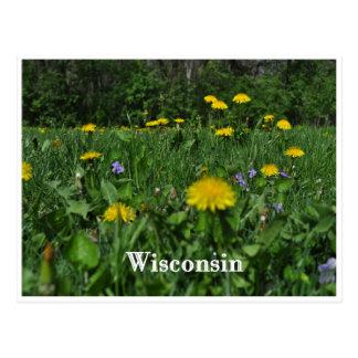 Dandelions & Violets Postcard