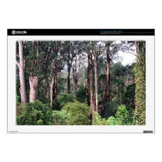 Dandenong Ranges Rainforest, Australia Decals For Laptops