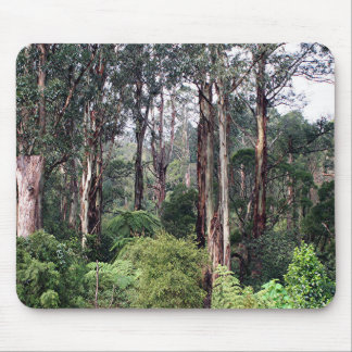 Dandenong Ranges Rainforest, Australia Mouse Pad