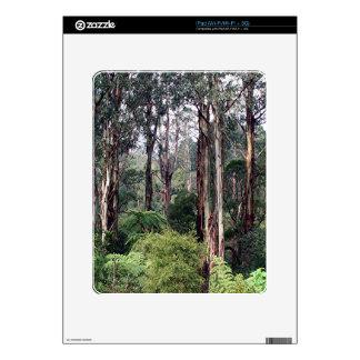 Dandenong Ranges Rainforest, Australia Skins For iPad