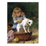 Dando al perro un baño - postal del perro del