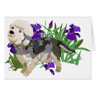 Dandy Dinmont among the Iris Greeting Card