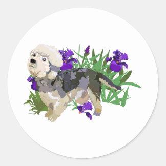 Dandy Dinmont among the Iris Stickers