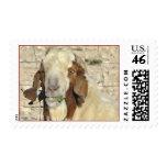 Dandy stamp