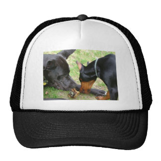 Dane and Doberman Trucker Hat