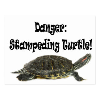 Danger:Stampeding Turtle! Postcard