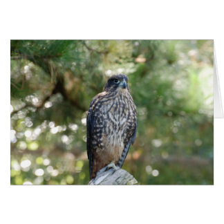 Dangerous Falcon On Falling Tree Looking For Targe Greeting Card