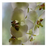 Dangling Orchid  Poster