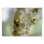 Dangling Orchids Greeting Cards