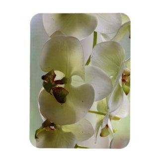 Dangling Orchids  Premium Magnet Magnets