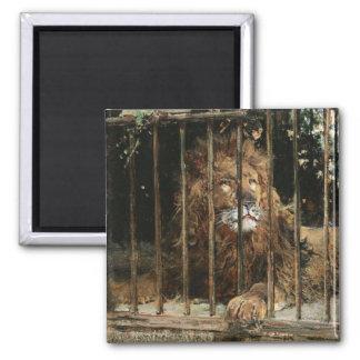 Daniel Hernández Morillo: At the Lion Cage Refrigerator Magnet
