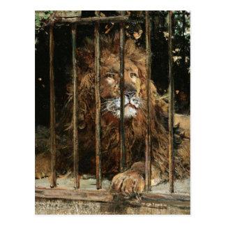 Daniel Hernández Morillo: At the Lion Cage Postcard