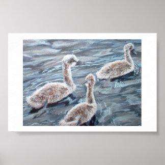 Danish Swanlings Poster