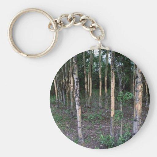 Daño del árbol por los mamíferos en refugio llavero redondo tipo pin